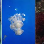 Haus Des Meeres — Aqua Terra Zoo