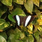 Schmetterlinghaus — Butterfly House